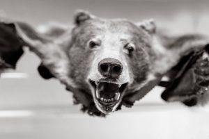 orso volante
